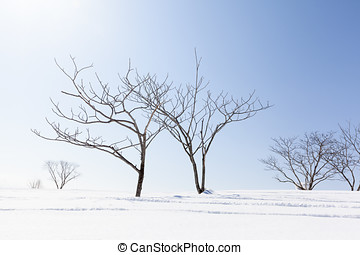 Bare Winter Trees and Snow - Stark winter trees in the snow...