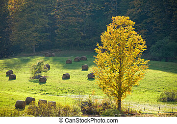 Sunlit field in autumn - Autumn sunlight striking a yellow...