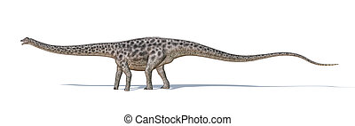 Photorealistic and scientifically correct 3 D rendering of a Diplodocus dinosaur.. Viewed from a side, while walking. On white background with drop shadow. Clipping path included.