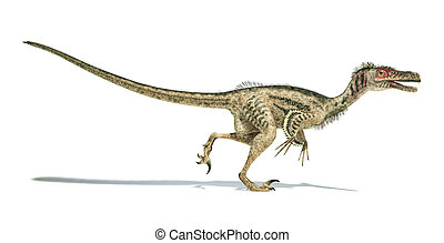 Velociraptor dinosaur, scientifically correct, with...