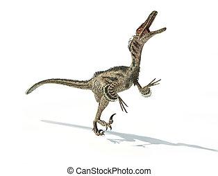 Velociraptor, 恐竜, 科学的に, 正しい, 羽