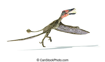 Dorygnathus flying Dinosaur photorealistic and scientifically correct representation, take off view. On white background with drop shadow. Clipping path included.