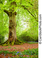 Tree Trunk in Woodland - A mature tree in woodland during...