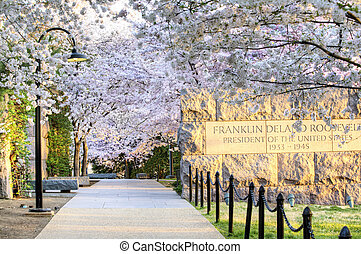 Cherry Blossoms Washington, DC - FDR Memorial is surrounded...