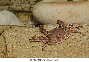 ghost crab on sand