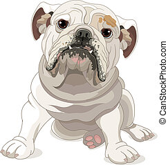 English Bulldog - Illustration of English Bulldog isolated...