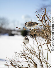 Two Birds on a Branch - Two birds perched branches after...
