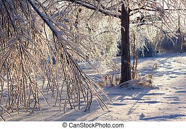 Danificado, árvores, após, extremo, gelo,...