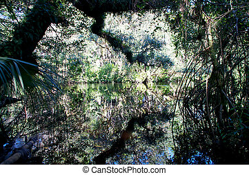 swampy river reflections