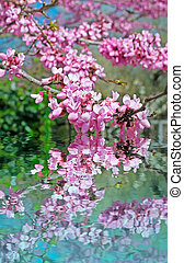 pink flowers reflection - pink flowers reflected in the...