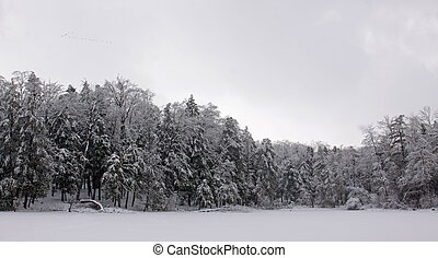 Winter Wilderness - Snow covered tree line shot after a...
