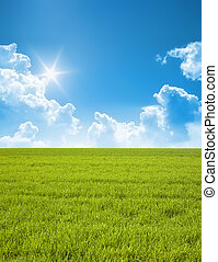 summer - A photography of a blue sky and a green field