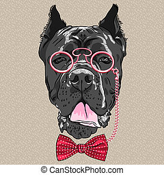 vector funny cartoon hipster dog Cane Corso - hipster dog...