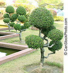 bonsai tree on the garden