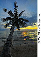 Coconut palms on sand beach in tropic on sunset. Thailand, Koh Chang, Klong Prao , Asia.