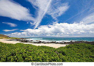Beach Scenic - Green plants forground this beautiful ocean...