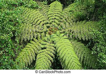 tree fern in the rainforest - great image of a tree fern in...