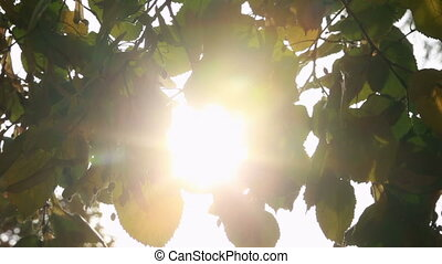 Sunlight shining through the leaves on a sunny day