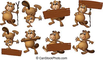 de madera, Castores, grupo, tablas, vacío