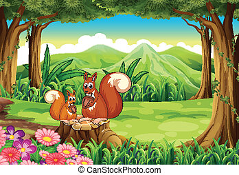 Squirrels at the forest