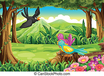 Birds at the forest