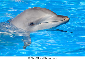 Bottlenose Dolphin - A happy Bottlenose Dolphin posing with...