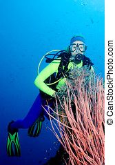 Diver and Sea Whips - a pretty female scuba diver with pink...
