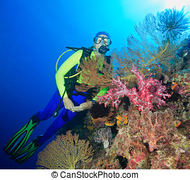 Diver Underwater - a pretty female scuba diver with pink...