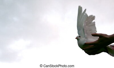 Hands releasing a dove in slow motion