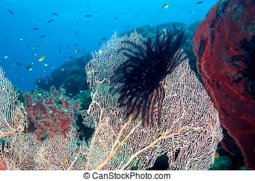 Tropical Reef - fish and sea fans on the reef, underwater