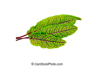 Sorrel green with red veins