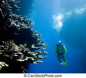 Scuba Diver looking at Coral - a pretty female scuba diver...
