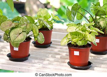 planten, binnen,  flowerpots