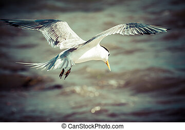 Sea bird seagull. nature closeup