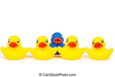 The blue leader - The yellow rubber ducks team with focus on...