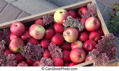 aplle box pupmkin stump - red apples pile of wooden box and...