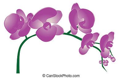 Orchid Clipart and Stock Illustrations. 3,670 Orchid ...