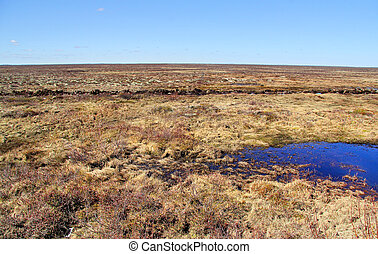 Tundra - Russian arctic tundra in spring