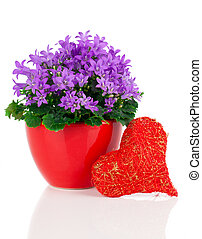 blue campanula flowers for Valentine's Day with heart, on white background