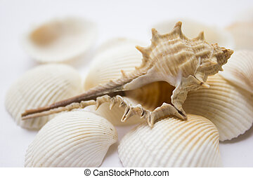 Seashells - Different soft colored seashells on a white...