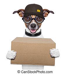 dog delivery post - postal dog delivering a big brown...