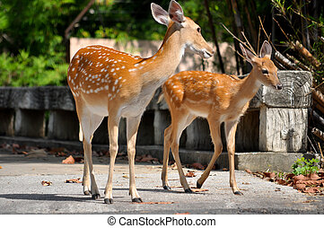 Sika deer and bambi are walking on the road.