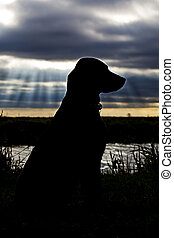 Silhouetted Labrador against River and Dark Sky Behind