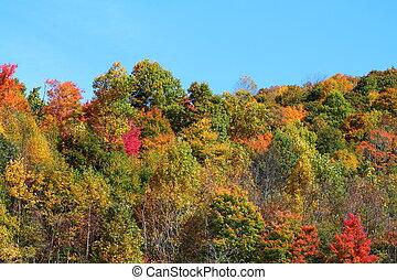 Autumn colors - autumn colors