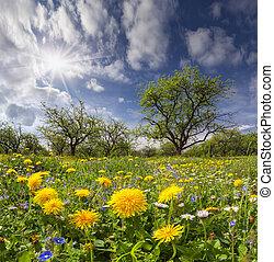 Dandelions on a green meadow in sunlight