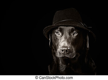 Handsome Chocolate Labrador in Black Hat - Black and White...