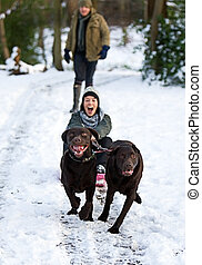 Labradors Pulling Girl on Sledge