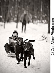 Two Labradors Pulling a Girl on Sledge