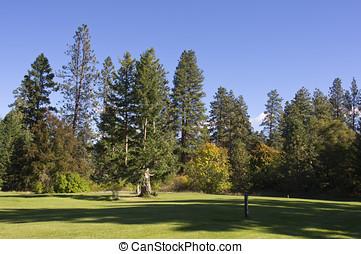 A peaceful estate lawn - A large manicured estate lawn...