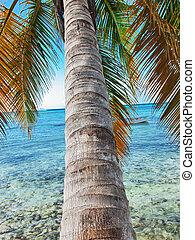 カリブ海, ドミニカ人, トロピカル, 共和国, 海, 浜
